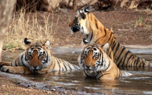 ranthambore-national-park-2